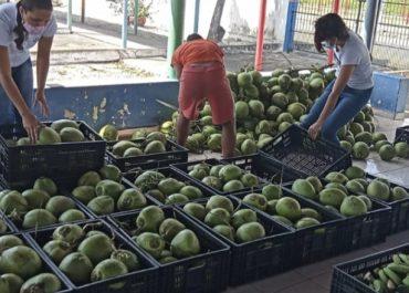 Governo da Paraíba distribui 970 toneladas de alimentos da agricultura familiar em 100 municípios